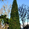 Tall Christmas Tree at Orange County Performing Arts Center in Costa Mesa California