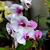 Orchids 103