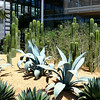 Succulent Gardening at the Newport Beach Library 7