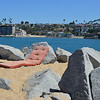 Nice Place for a Nap at the Wedge at Newport Beach CA