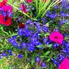 Spring Flowers in Costa Mesa 101