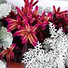 Nice Plants in Laguna Beach California