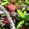 Prickly Tree in Costa Mesa