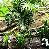 Tropical Backgrouond in Costa Mesa California