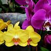 Orchids 102