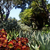 Gardens at Huntington LIbrary in Pasadena California