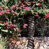 Springtime in Palm Springs 1