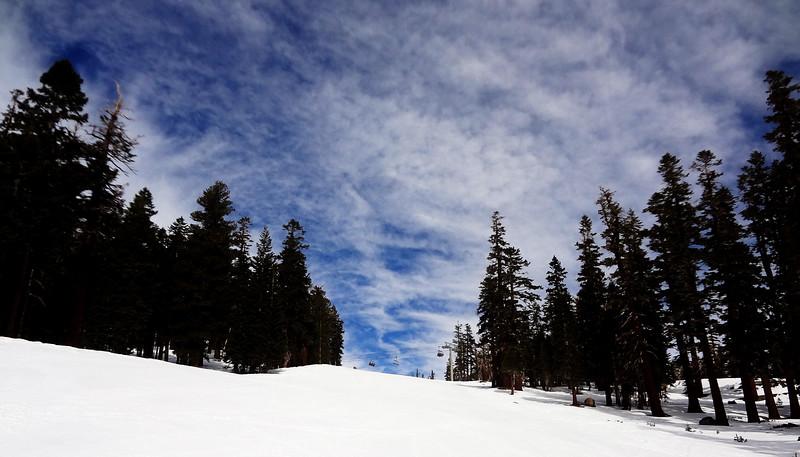 Trees and Snow at Mammoth Lakes CA
