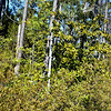 Wooded Terrain Where English Settlers Landed at Jamestown VA